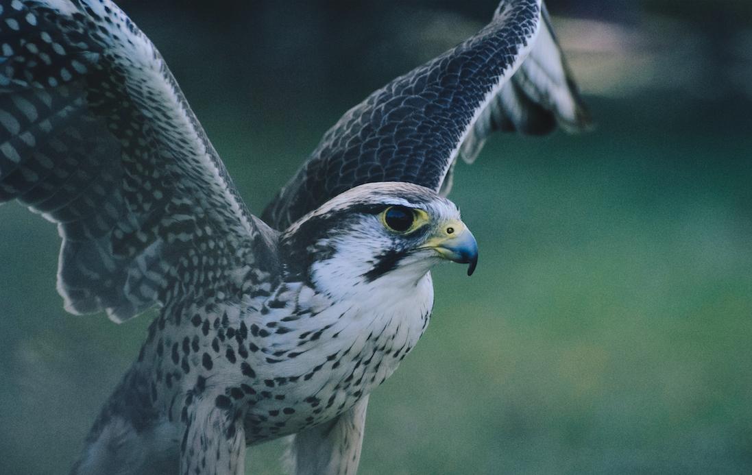論文を読むためのステップ1:『鳥の視点』